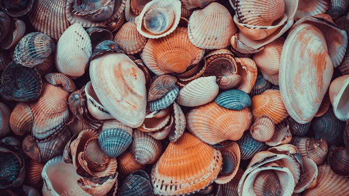 beautiful background and texture of nature sea shell pattern