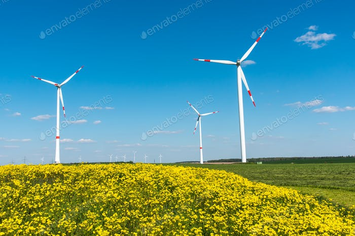 Windwheels and yellow flowers