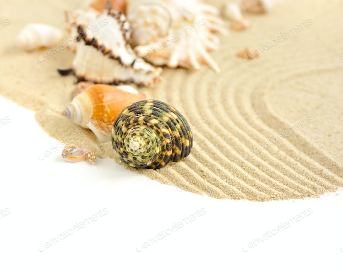 Sea shells in the sand on a white background