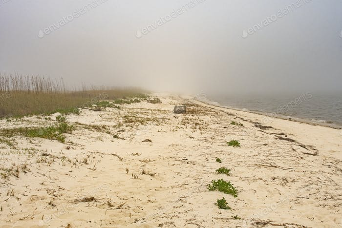 Foggy Coastal Beach in Florida