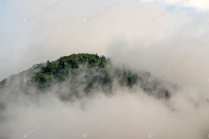 View of mountain forests covering by fog