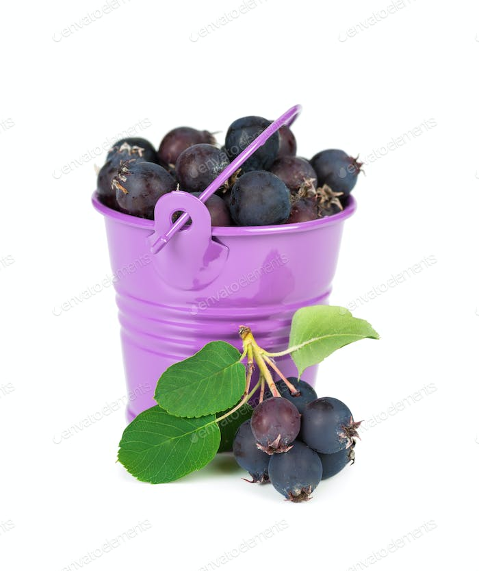 Bucket with berries