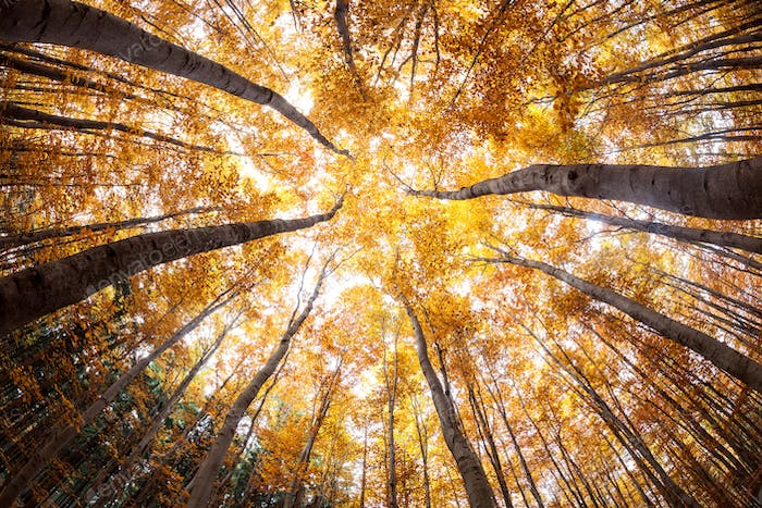 autumn forest treetops (intentionally distorted image; shot with