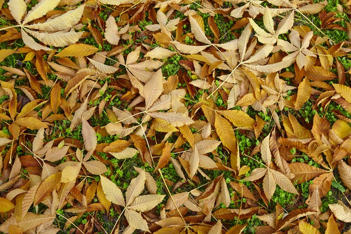 Autumn leaves detail on golden tone. Fall textured background. Horizontal
