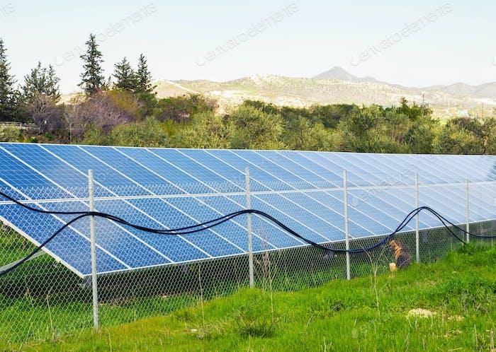 Sonnenkollektoren auf einer Wiese platziert.