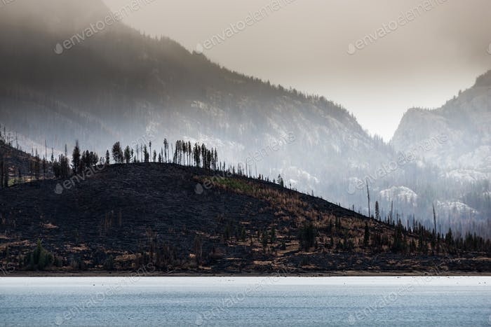 Wildfire aftermath Jackson Lake Grand Teton