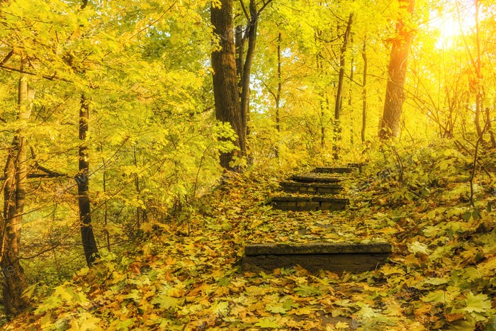 Stairway to the beautiful sunny autumn forest