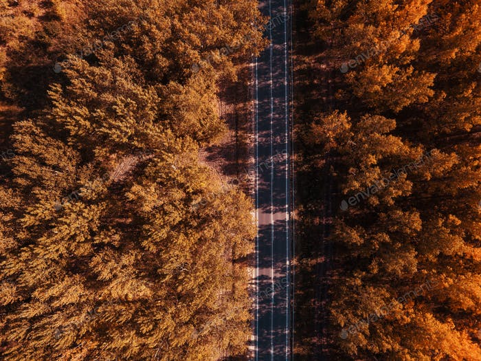 Aerial photography of empty road through autumn forest