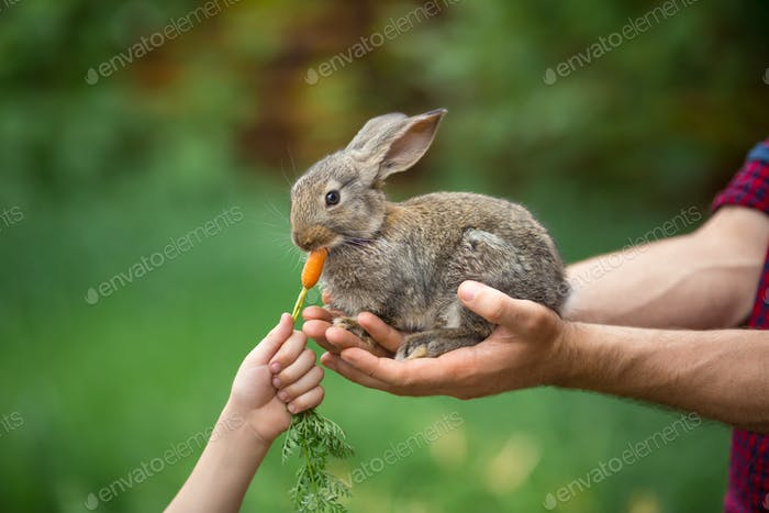 Kaninchen. Fütterung Tier