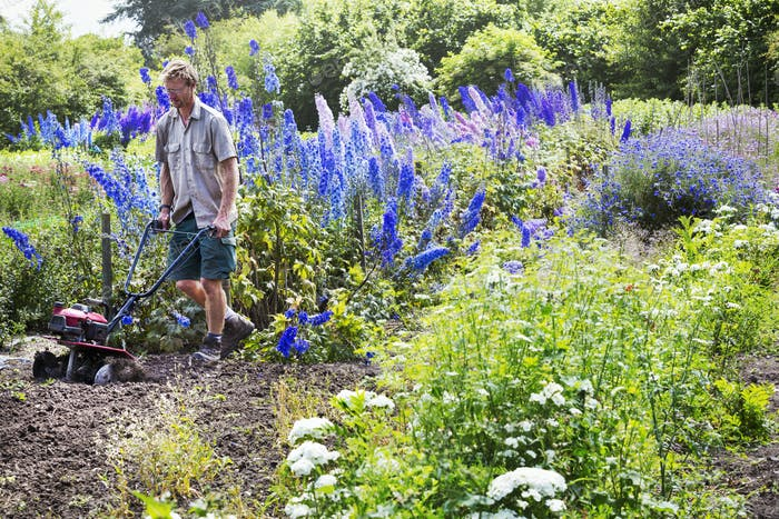 A man using a rotivator on soil in flowers beds in an organic garden.