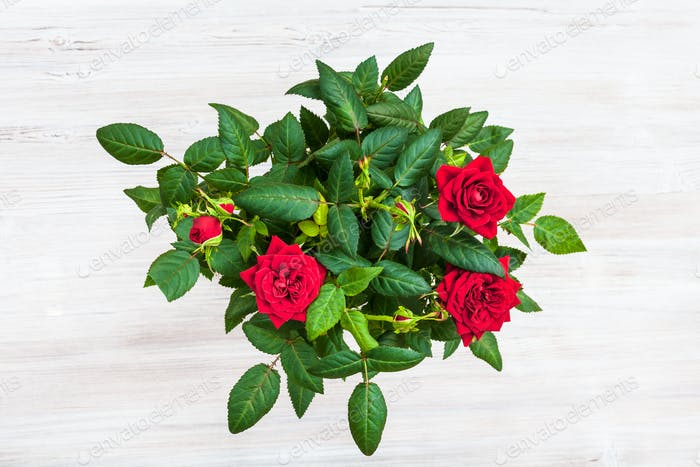 bush with fresh red rose flowers on gray table
