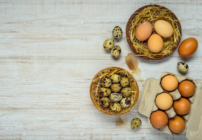 Nest with Quail and Chicken Eggs on Copy Space