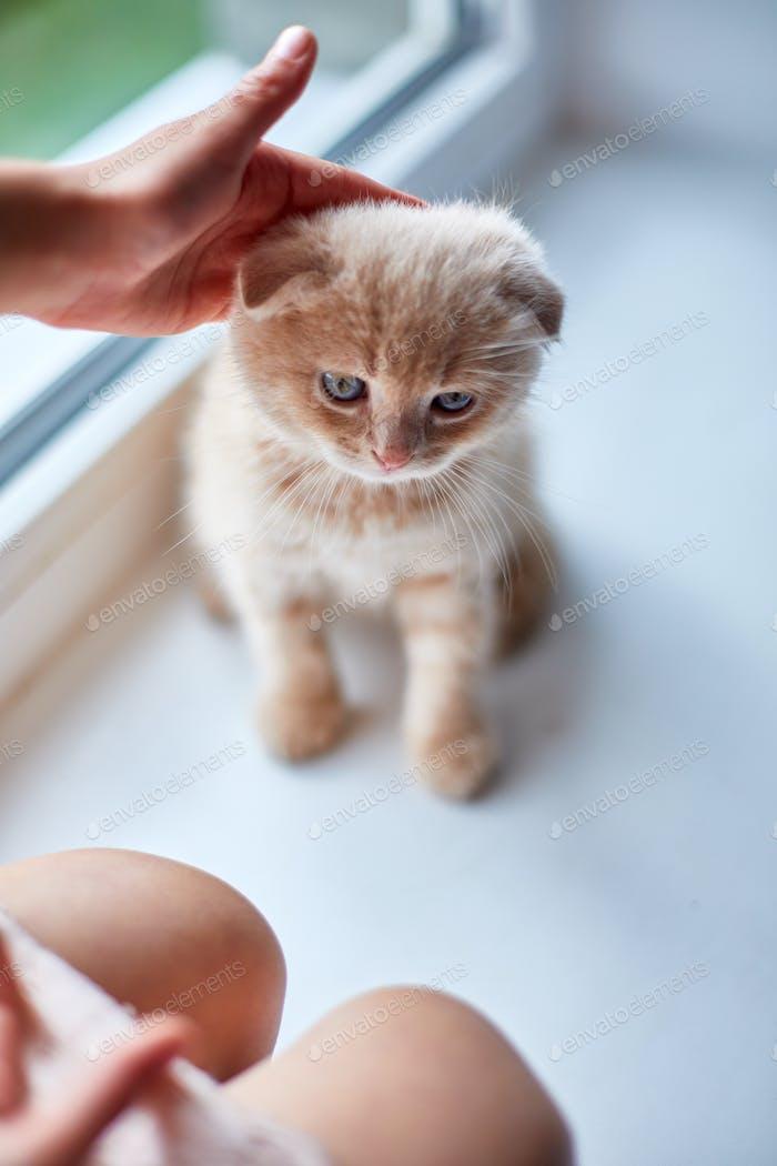 Kind Mädchen spielt mit einem britischen kleinen verspielten Kätzchen zu Hause windowsil