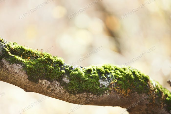 Tree branch covered with green moss