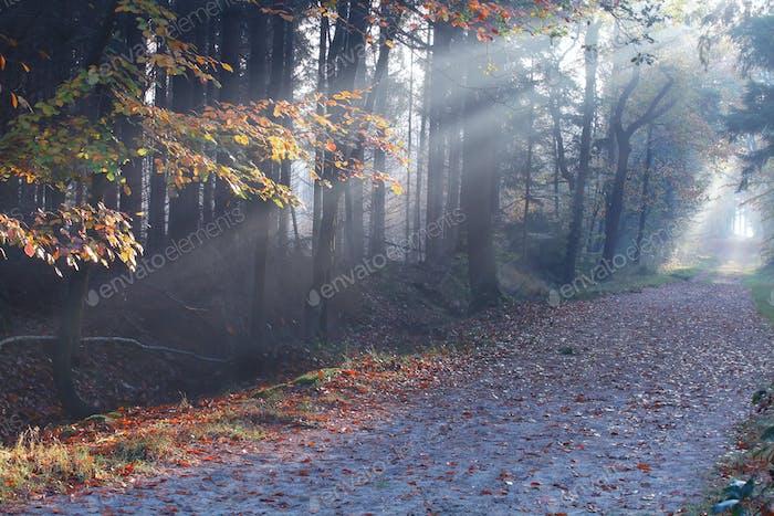 Sonnenstrahlen im nebeligen Herbstwald