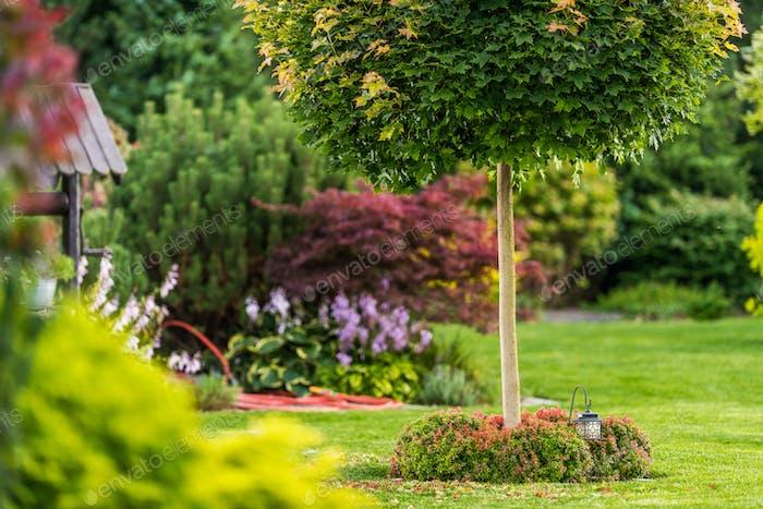 Backyard Garden Summer Vegetation
