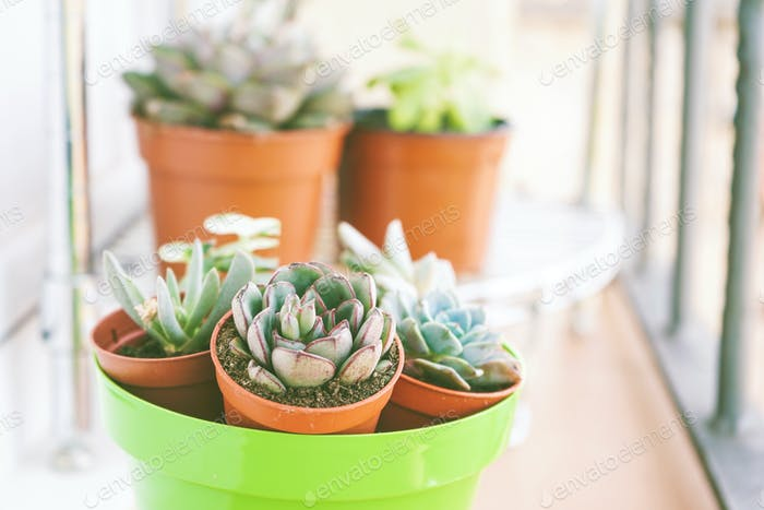 Mix of beautiful succulent plants