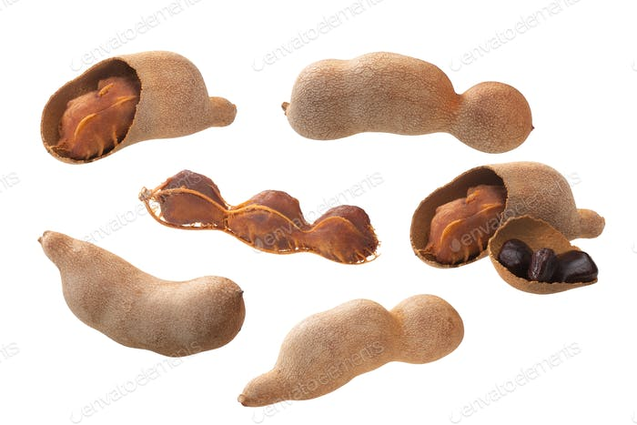 Tamarind pod t. indica, paths,  isolated
