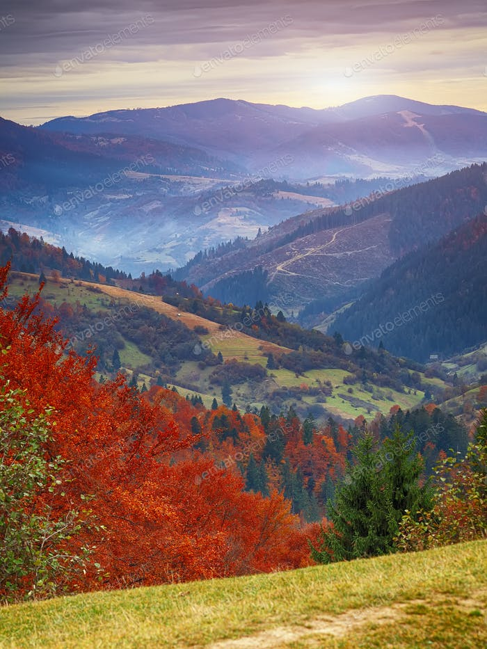 autumn forest and mountains in the background