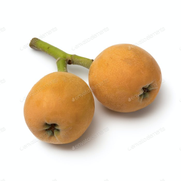 Pair of fresh picked loquats
