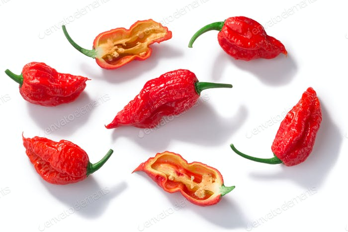 Bhut Jolokia ghost pepper c. chinense, paths, top