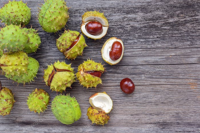 Chestnut on old wooden background with copy space for your text.