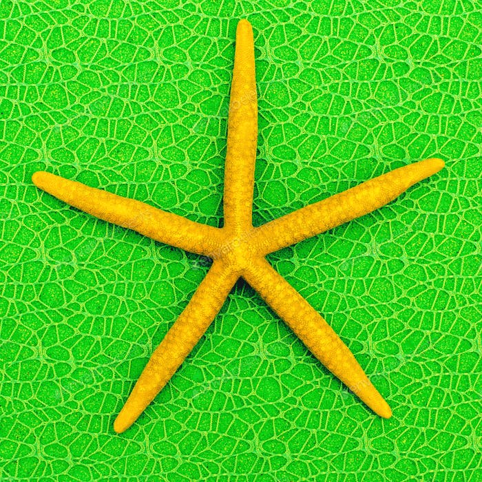 Starfish. Mood vacation. Minimal art