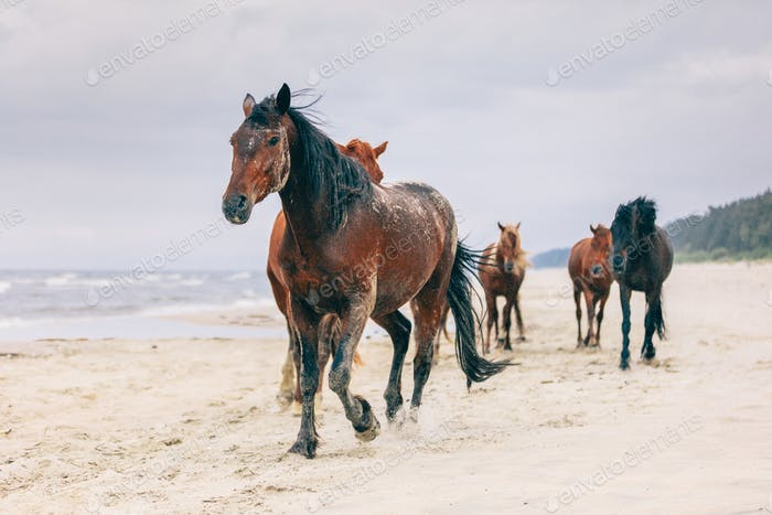 A herd of horses walking on the windy seashore.