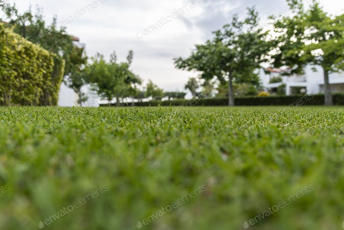 Vista baja en la hierba con una vista al jardín