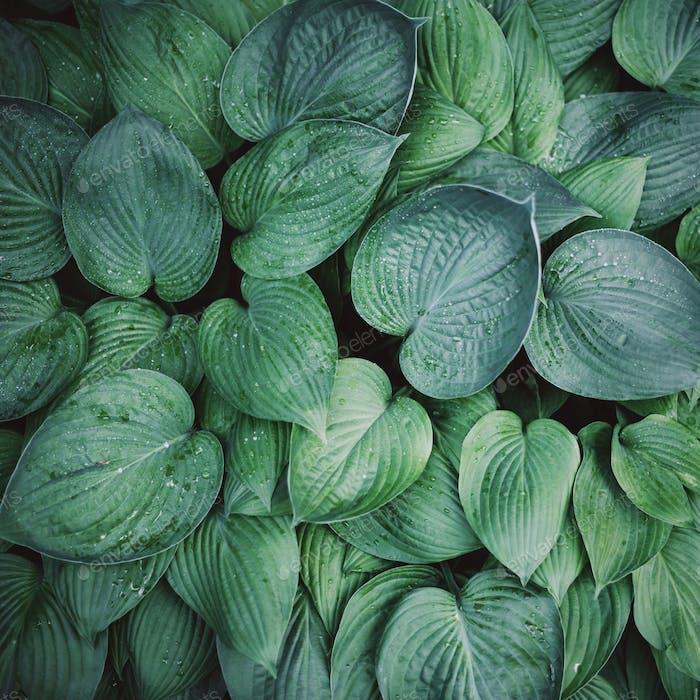 Frisches grünes Laub. Hinterlässt Hintergrund. Grüne dynamische Kulisse für Ihr Design. Tropisches Blatt