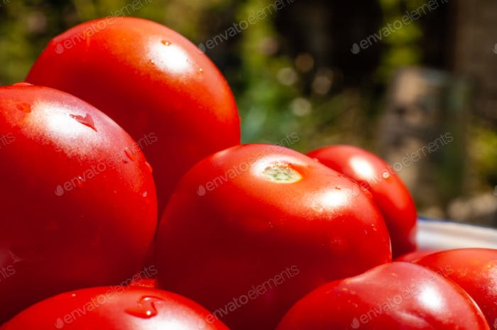 Tasty fresh juicy red tomatoes