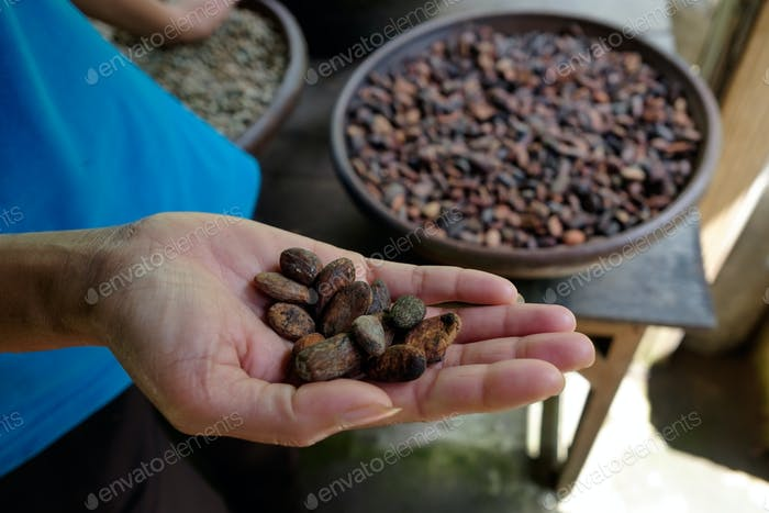 Woman holding cocoa beans in hands