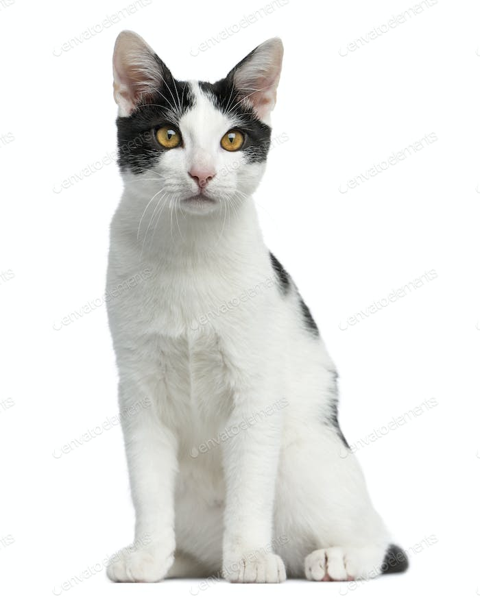 Front view of an European Shorthair kitten sitting, 4 months old, isolated on white