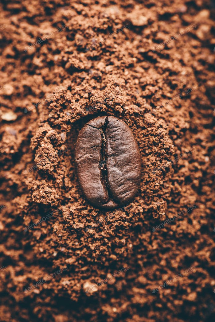 Coffee bean on heap of grinded coffee