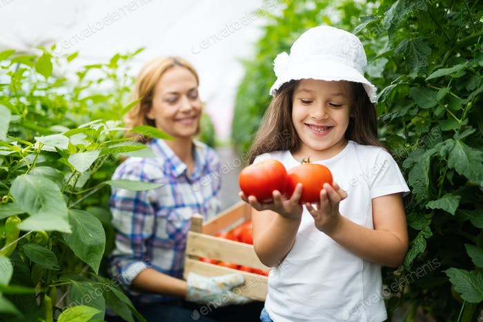Family growing organic vegetables with children and family at farm