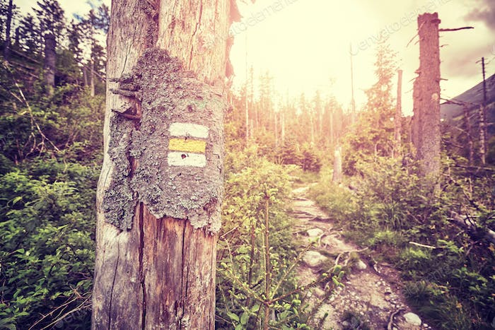 Vintage toned hiking trail marking painted on tree.