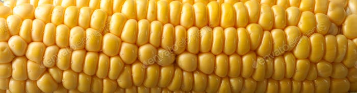 Fresh raw corn on gray wooden table, close up