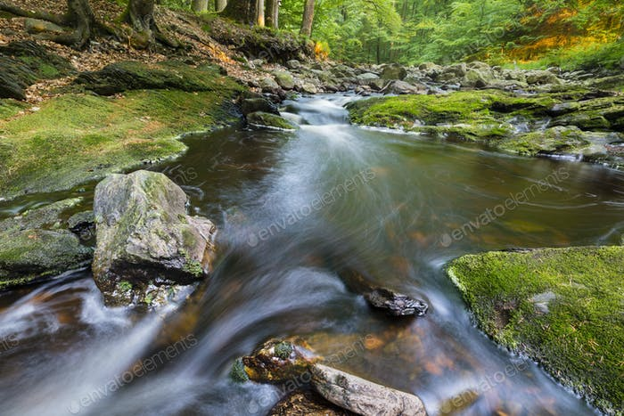 Mountain Stream In Evening Light