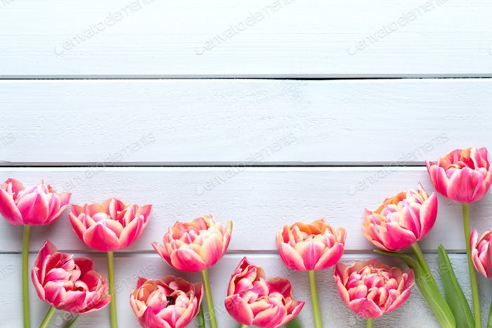 Spring flowers tulips on pastel colors background. Retro vintage style.