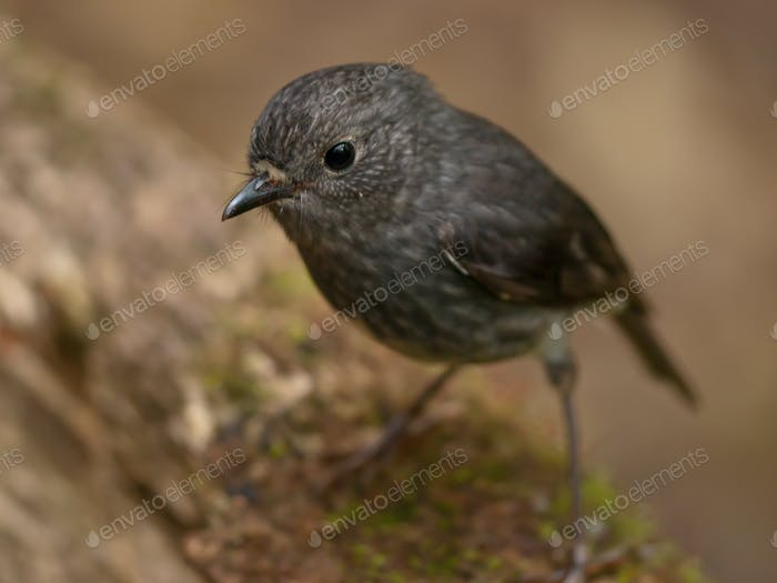 cute grey bird