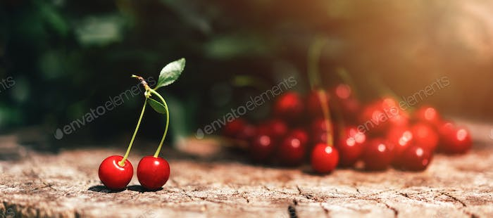 Ripe cherries on wooden table with sunlight