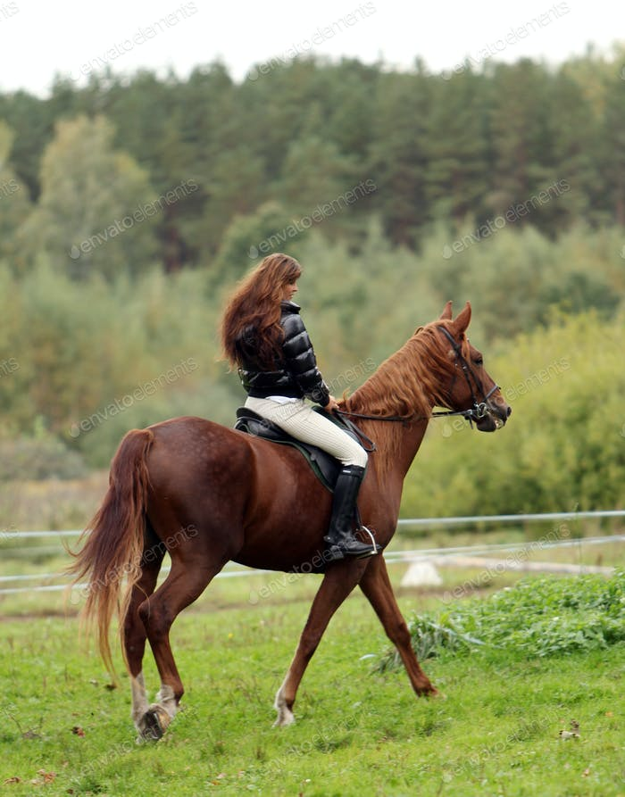 Woman and her brown horse