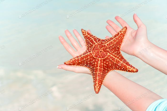 Tropical beach with a beautiful red starfish