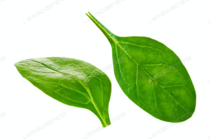 Flying spinach leaves