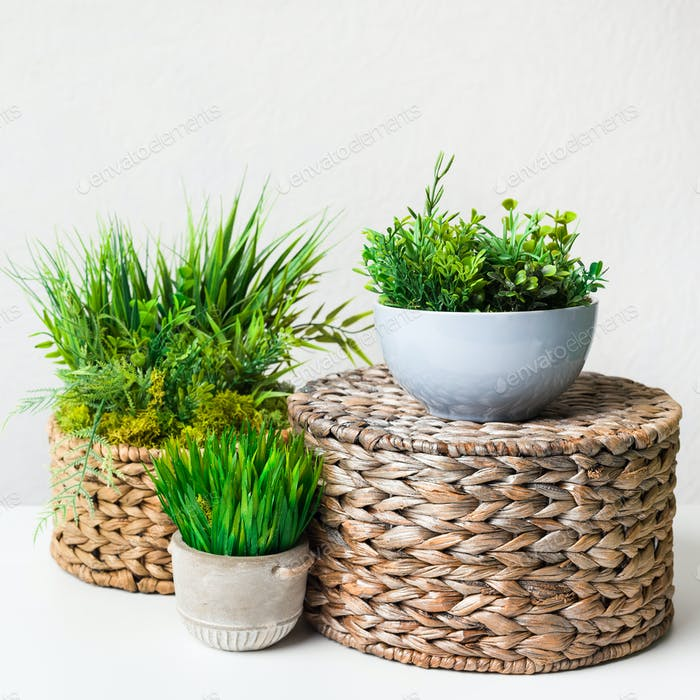 Artificial grassy plants in pots on wicker boxes over light wall