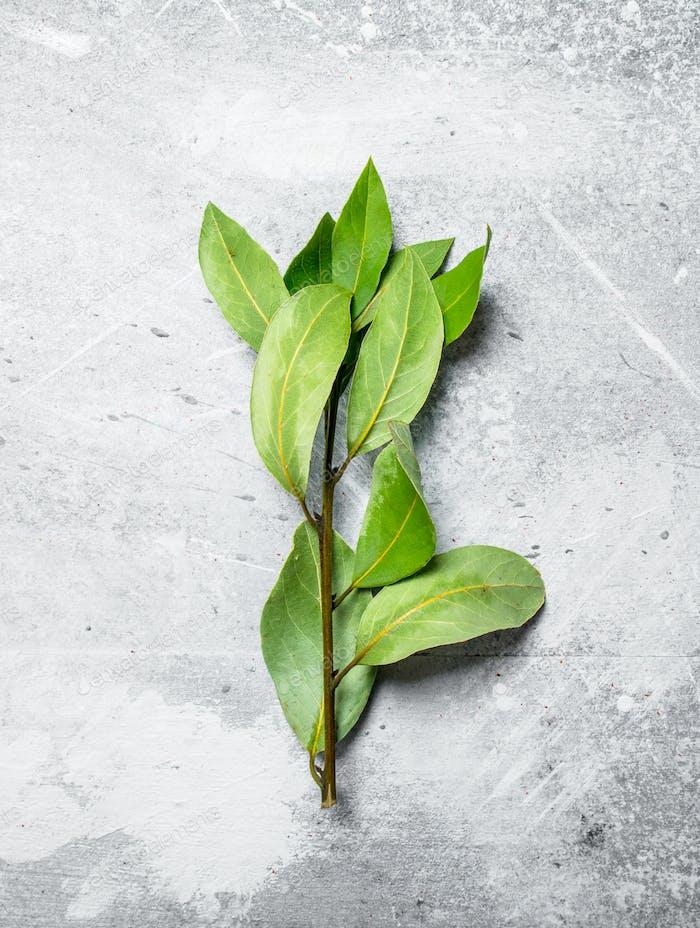 Fragrant Bay leaf.