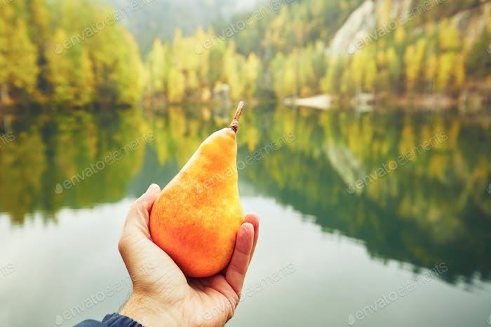 Pear in the palm