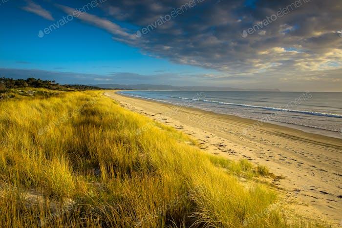 Uretiti Beach New Zealand