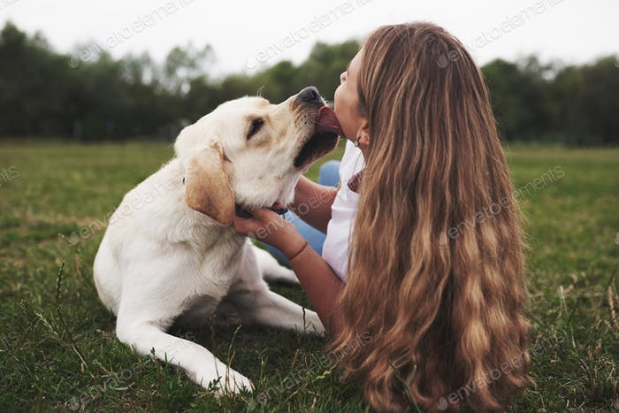 Attractive young woman with dog outdoors. Gril on a green grass with labrador retriever
