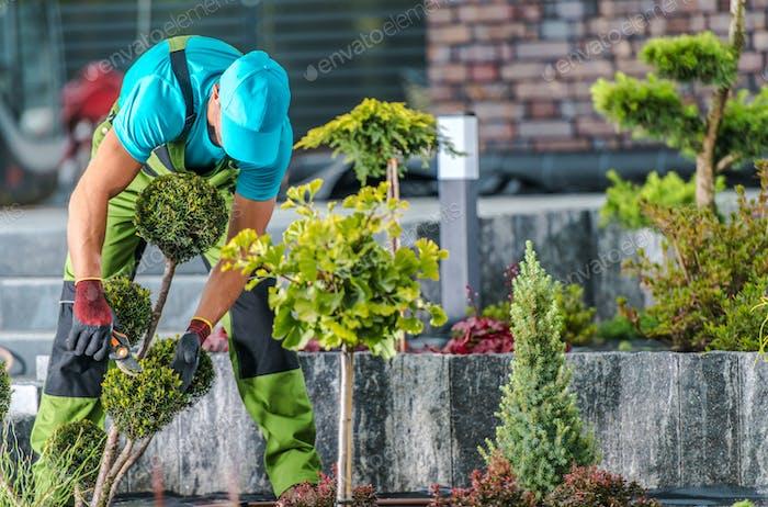 Garden Maintenance by Professional Gardener